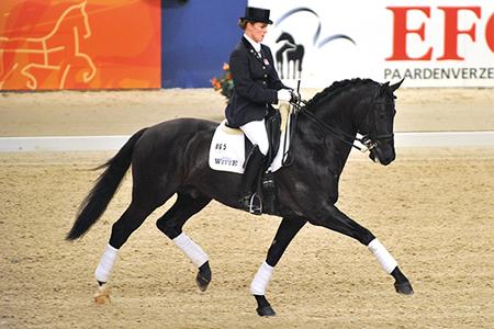 Another stallion star by Jazz, Wynton