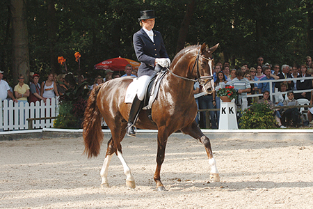 Belissimo M is by Beltain who is by Bolero and out of one of Dr Schulz-Stellenfleth's foundation mares, Ganseliesel (Grande-Marcio). Belissimo was a star at the Bundeschampionate and is now producing exciting young stock
