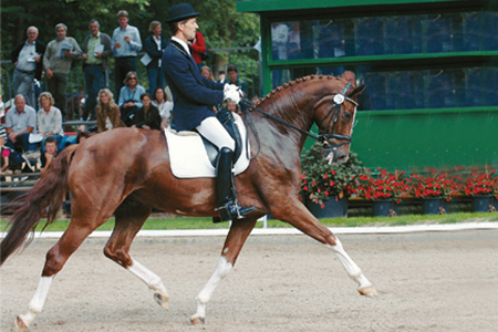 Bred in Westfalia, out of an Ehrenmarsch mare, the De Niro son, Daily Pleasure was the 4 Year old Riding Horse Champion, in the mares and geldings class, at the 2005 Bundeschampionate