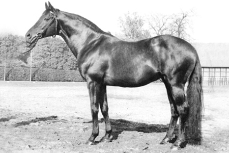 Busoni – you need the Thoroughbred for soundness