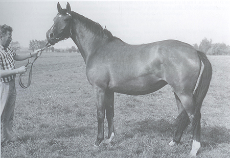 Cita H grandmother of Contender