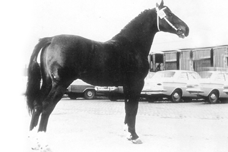 Codex was reputed to produce horses that were difficult to ride - but he was a brood mare sire