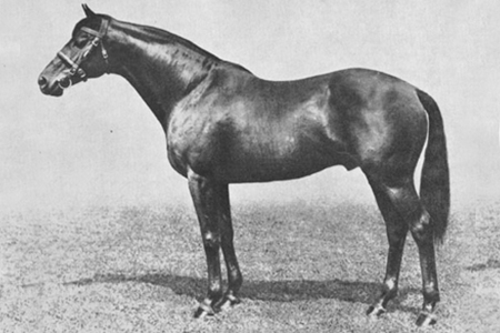 One of the great Thoroughbred jumping sires - Pharos