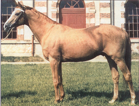 Rantzau, close to the end of his career at St Lö stud