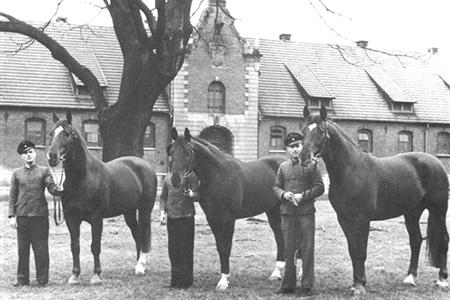 Senator and his sons. From the left- Senator, Sender, Sesam I