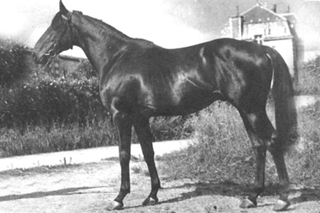 Such an influence on showjumping breeding - the Thoroughbred, Ultimate