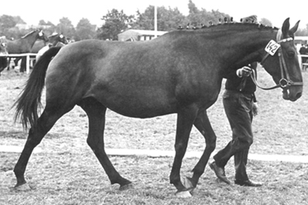 Viola H – by Cottage Son, the dam of Lord