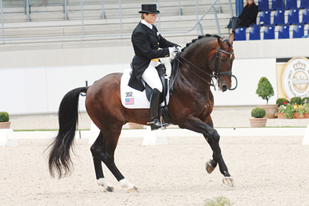 Voltaire also produced a few dressage horses, like Leslie Morse's Grand Prix stallion, Kingston