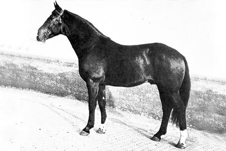 Wendekreis - carrying on the Ferdinand line