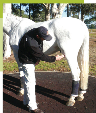 Knees Up! Stifle lameness in horses | The Horse Magazine