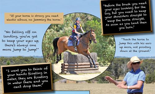 how to teach school halt horse