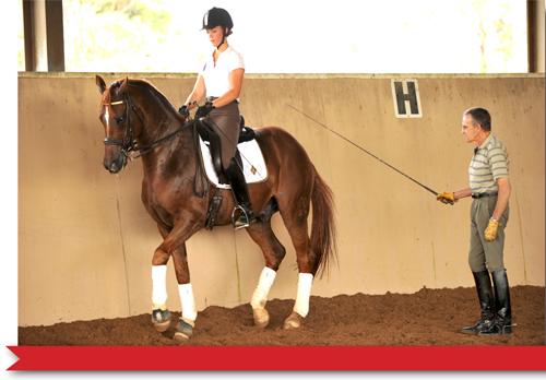 Nancy Walker equestrian