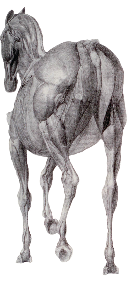 Why Is An Understanding Of Biomechanics Important? | The Horse Magazine
