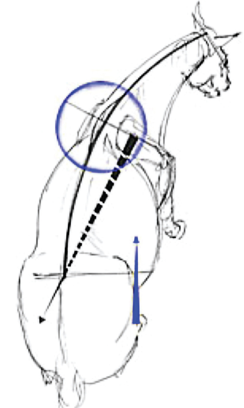 why is an understanding of biomechanics important