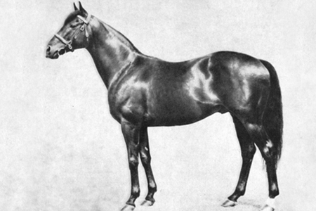 Tudor Minstrel sired the winners of 311 races and €186,972 in prizemoney