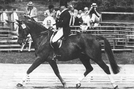 Furioso 15 was trained by Fritz Tempelmann, won the German Championship in 1978 with Udo Lange