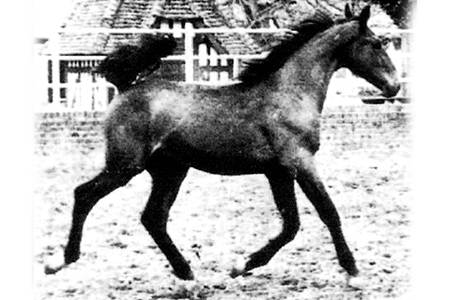 Galoubet at 6 months old