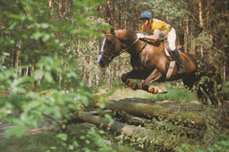 German Eventing star, Horst Karston with Fernandes, by Furioso II