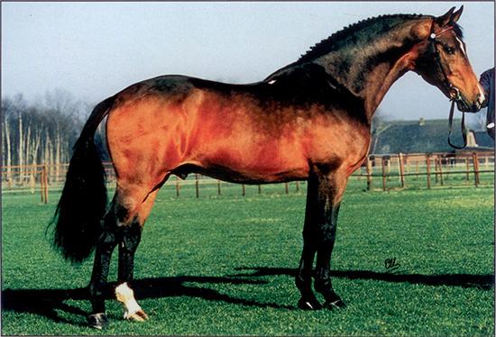Nimmerdor | The Horse Magazine