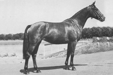 The Champion Oldenburg mare of 1973 - Fumira by Furioso II