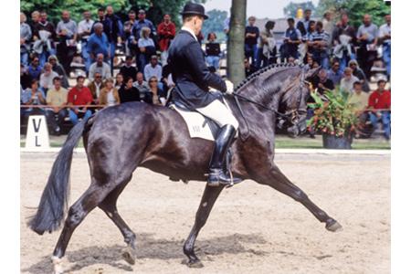 Wahajama - Bundeschampionate winner with Holga Finken and a Grand Prix horse for Ann-Kathrin Linsenhoff