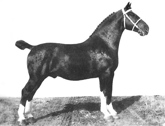 KWPN: The development of the Dutch Warmblood | The Horse