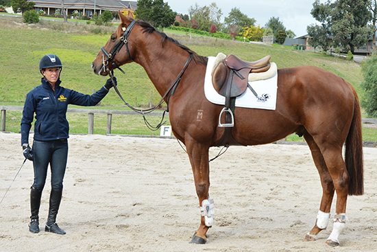 Re-training the Off-The-Track Thoroughbred as a Jumper | The