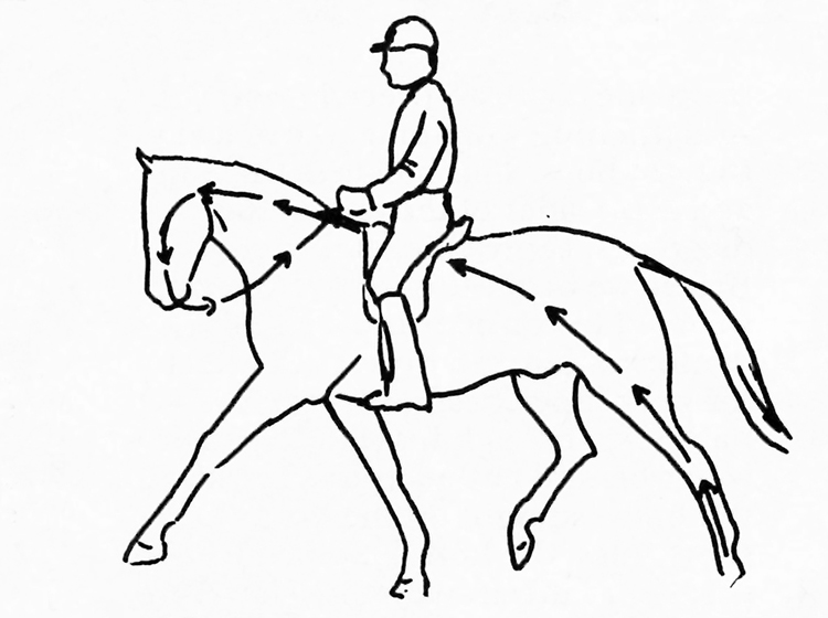The Basics Of Dressage With Christian Thiess Exercises To