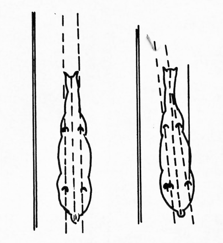 2 white feet dressage diagrams