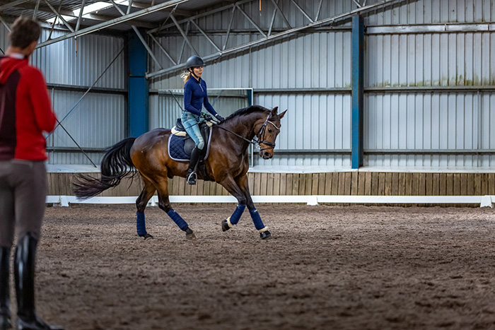 A Dressage Clinic with Stefan Wolff – From an Insider's
